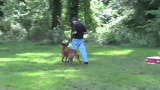 Maryland Dog Training   Andrew And Lonny