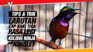 Gambar cover TIPS & TRIK : Larutan Cap Kaki Tiga Rasa LECI Bikin Kolibri Ninja KONSLET   Master Kicau