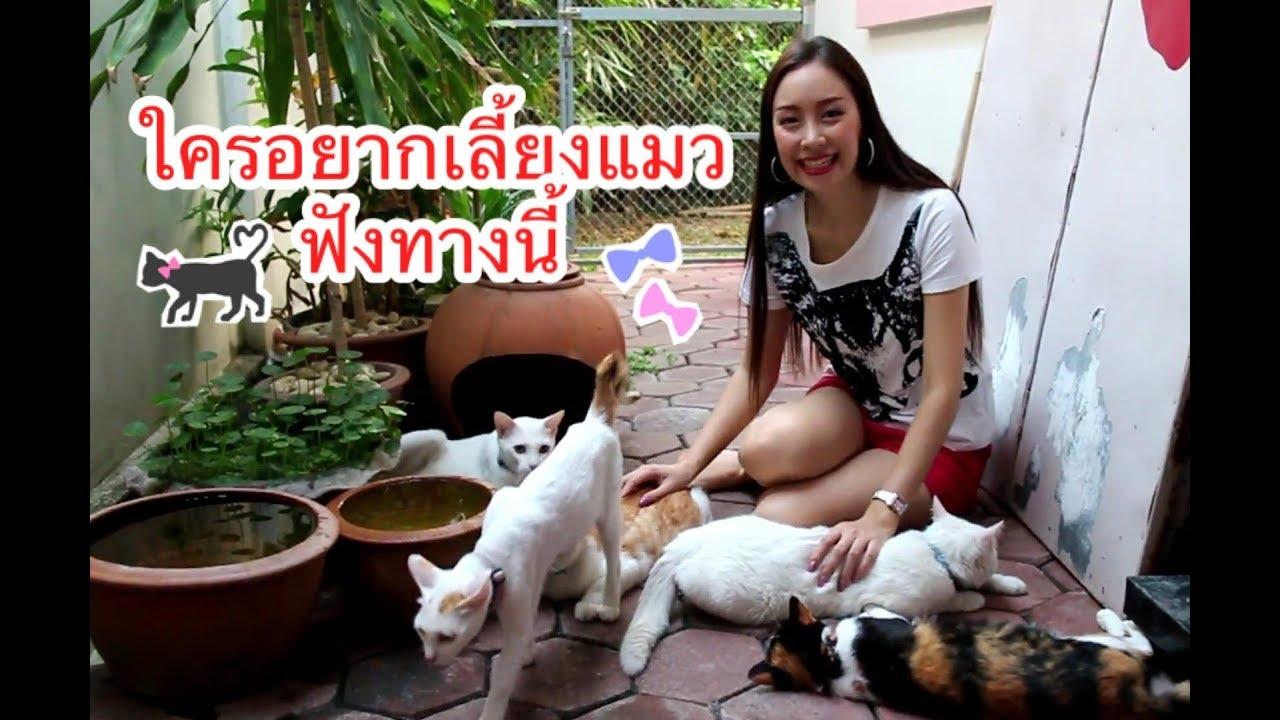 ตามติดชีวิตบ้านๆ Ep.6 |ใครอยากเลี้ยงแมวฟังทางนี้ | JaneNy Jane