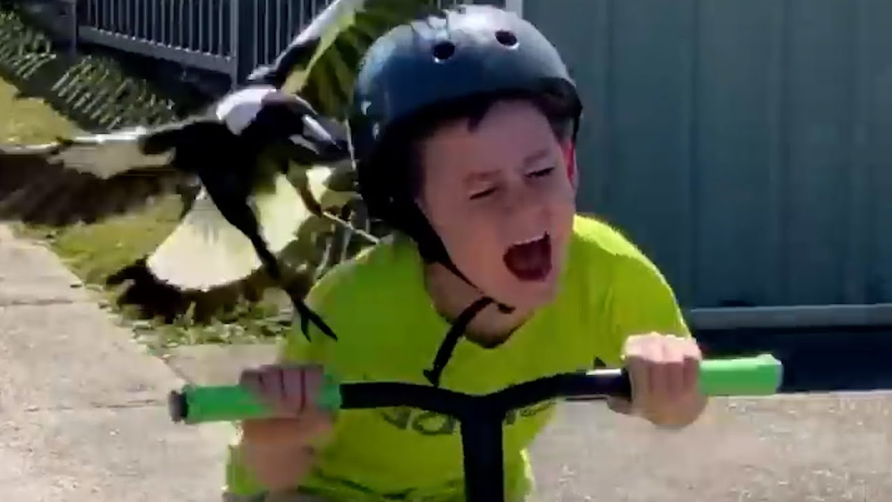 Download When Birds ATTACK! 🦅 Try Not To Laugh