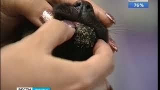 Семерых щенков хотели утопить в гудроне в Иркутске и Ангарске