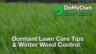 What about my Lawn During the Winter?  - Dormant Lawn Care Tips