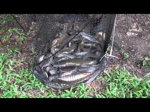 ไอ้โง่ในคลอง fisherman thailand