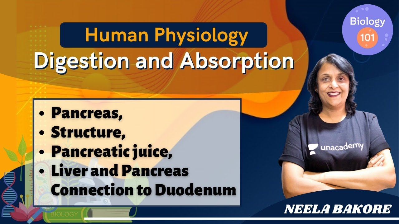Human Physiology - Digestion and Absorption | Part-7 | NEET Biology | NEET UG | Neela Bakore