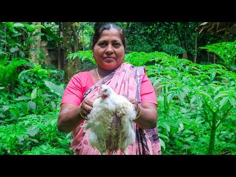 Chicken Cooking: Bengali Village Chicken Curry Cooking Recipe for Kids by Village Food Life