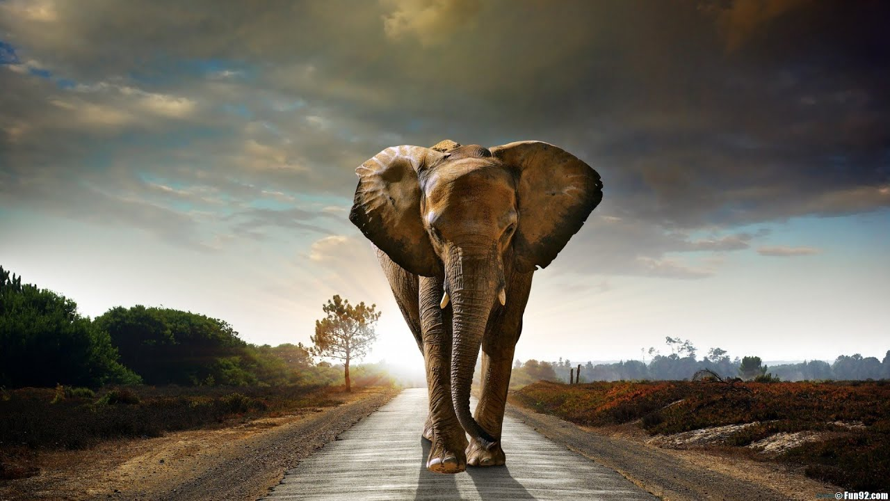 african bush elephant interesting facts best elephant 2017