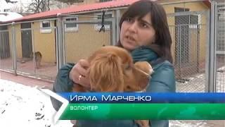 """""""Служба поиска пропавших животных"""" вернула 5 питомцев домой"""