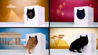 Одноразовый туалет для кошек