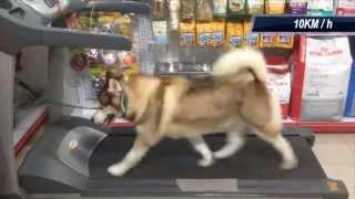 Ky On A Big Treadmill @ Happy Dog