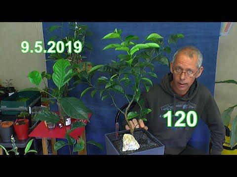 mega-update-der-exoten-im-haus-von-mandarine-über-granatapfel-bis-zur-mango-und-mehr-pflanzen