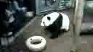Gambar cover Panda