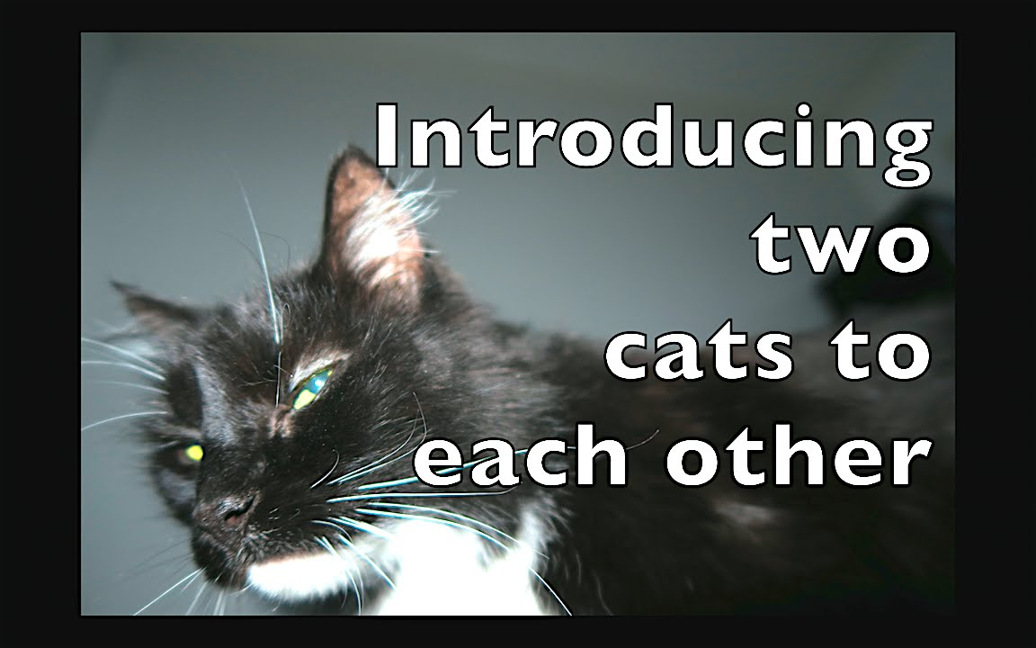 meet oliver introducing two cats to each other youtube. Black Bedroom Furniture Sets. Home Design Ideas
