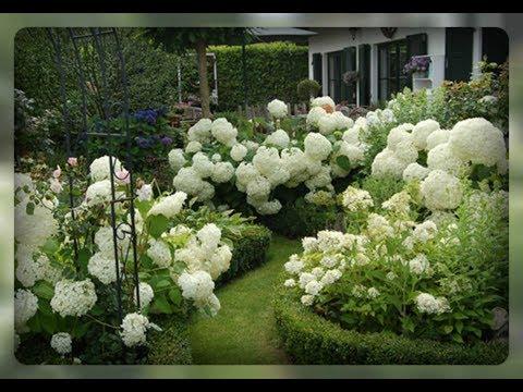 Белые цветы в вашем саду.