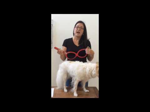 Little Paws Pet Boutique Buddy Belt 2 Harness