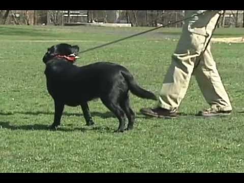 How to train a older dog not to run away