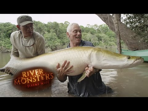 Incredible REEL TIME Arapaima Catch | ARAPAIMA | River Monsters