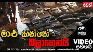 Balumgala | 04-05-2016 | Kunu Malu