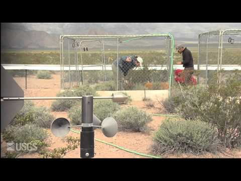 The Heat is On: Desert Tortoises and Survival (Full video)