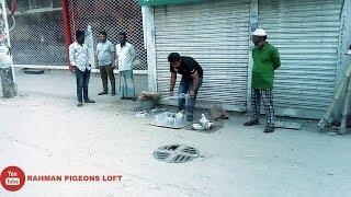 Pigeon tossing -9 pis (2018) Rahman pigeons loft
