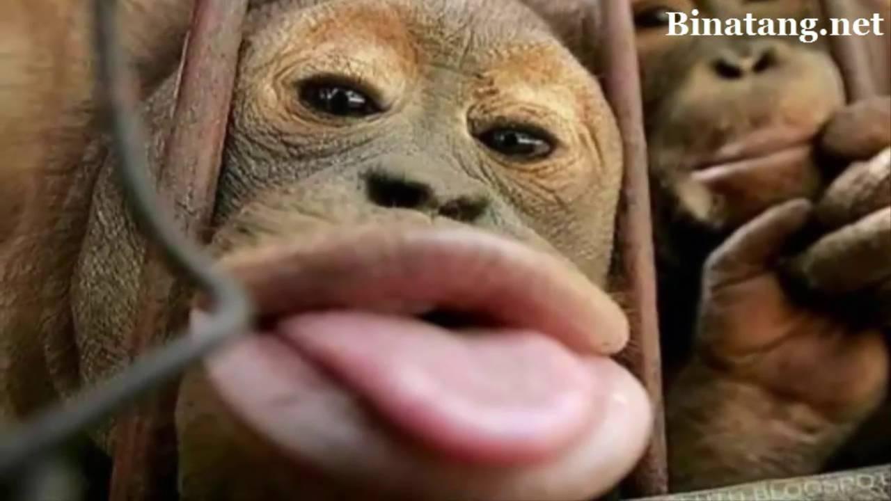 8500 Koleksi Gambar Binatang Lucu Gokil HD