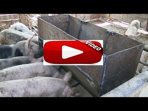 самодельная кормушка для свиней (поросят)