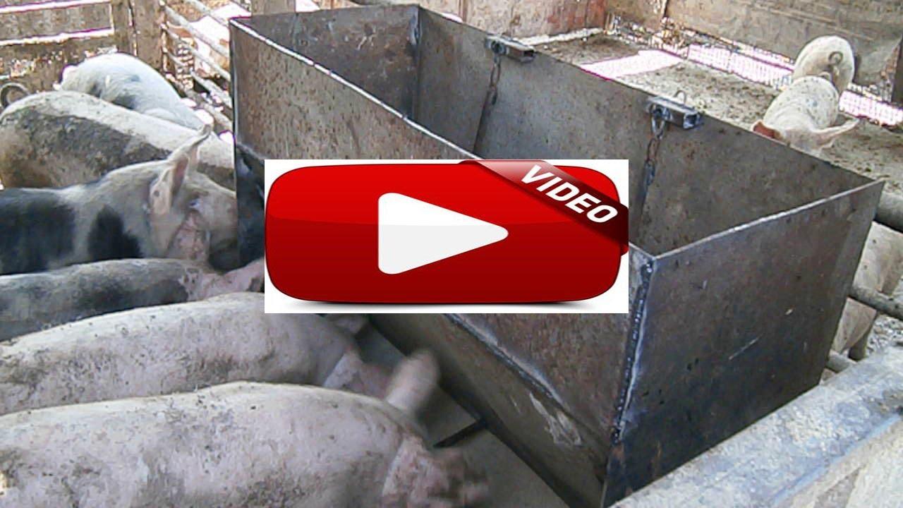 Поилка для свиньи своими руками фото 708