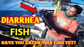 """OILFISH the """"LAXATIVE"""" fish 