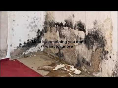 does bleach kill black mold youtube. Black Bedroom Furniture Sets. Home Design Ideas