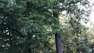 Белка в парке Горького в Москве. Я думала, что они уже давно сбежали из города, но видимо тут им ок)