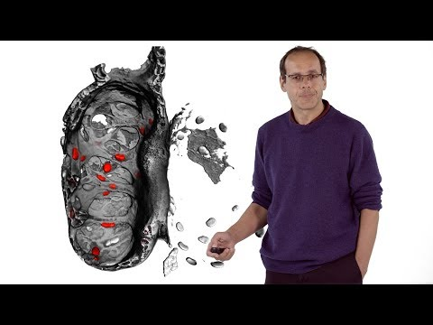 Didier Stainier (MPI) 2: Cardiac Trabeculation