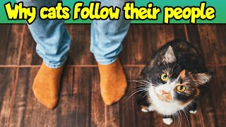 Why Does My Cat Follow Me Wherever I Go (Surprising Reasons!)