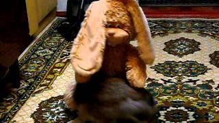 Кролячье порно