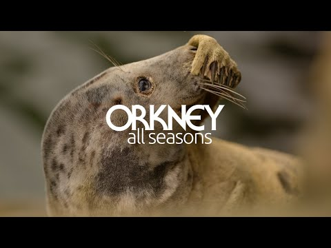 Follow the Wildlife Trail in Orkney