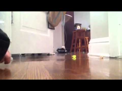 Thumbnail for Cat Video Hanukkah Dreidel Cat