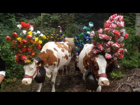 A Cow Story : la désalpe de Saint-Cergue 2013