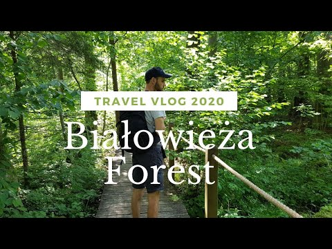 A short trip to Białowieża Forest | Vlog