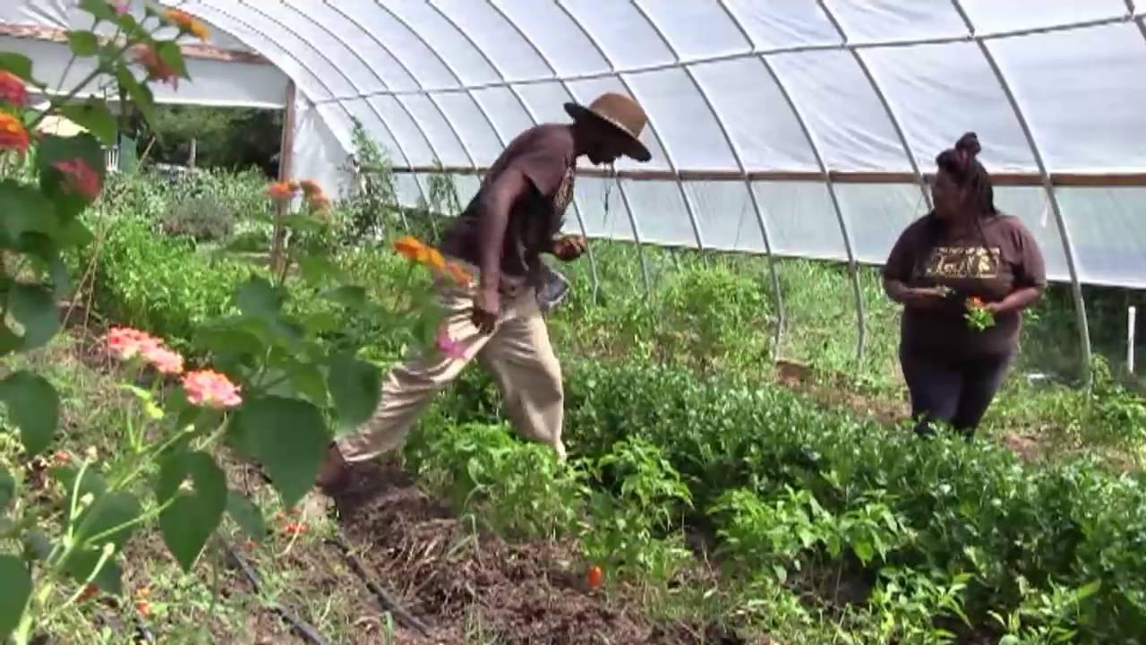 Gilliamu0027s Garden Center Atlanta   Georgia Farmers Market Assoc.