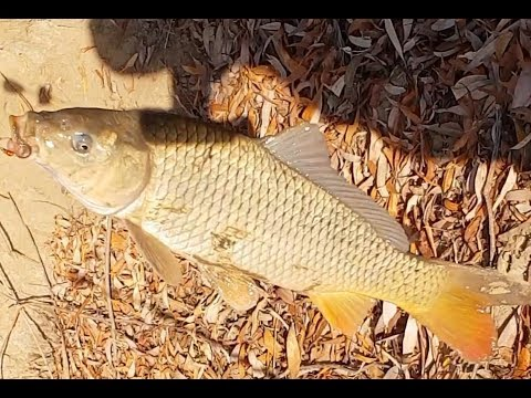 Рыбалка на сазана и судака в ноябре, Астрахань 2018