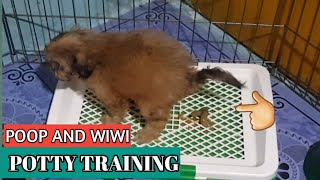 How to Potty Train Your Puppy/Dogs Indoor Easily and Effective