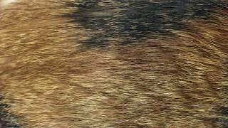 조아스 애견이발기 고양이이발