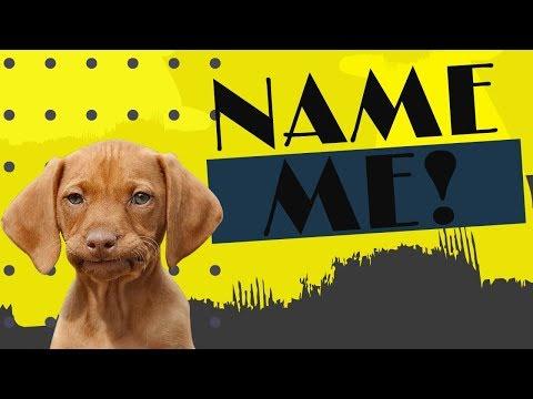Top Dog Names 2019