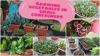 వేస్ట్ డబ్బాల్లో మొక్కలు పెంచడం ఎలా | how to use waste boxes in garden