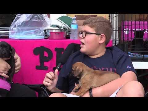 Basset Hound/Beagle Puppies at The Pixel Fund