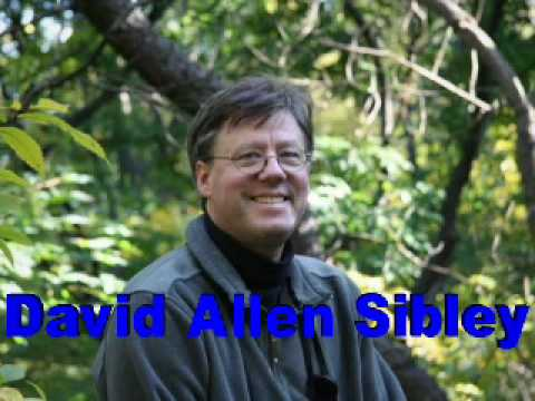 David Allen Sibley-The Sibley Guide to Trees-Bookbits author interview