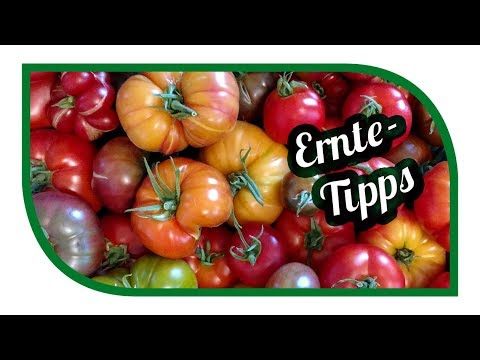 Ernte Tipps Juli 🥒 Rekord Ernten im Gartengemüsekiosk 🌱
