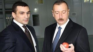 İlham Əliyevdən kürəkəni Səməd Qurbanova dəstək - Pomidor istehsalı