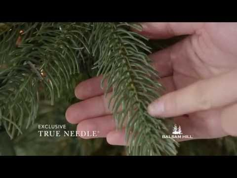 Woodland Spruce Tree from Balsam Hill™ from YouTube · Duration:  38 seconds