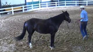 How to Move Your Horse's Hind Quarter Yield on the Ground | Ground Work Series 2/6    Exercise #1 HQ