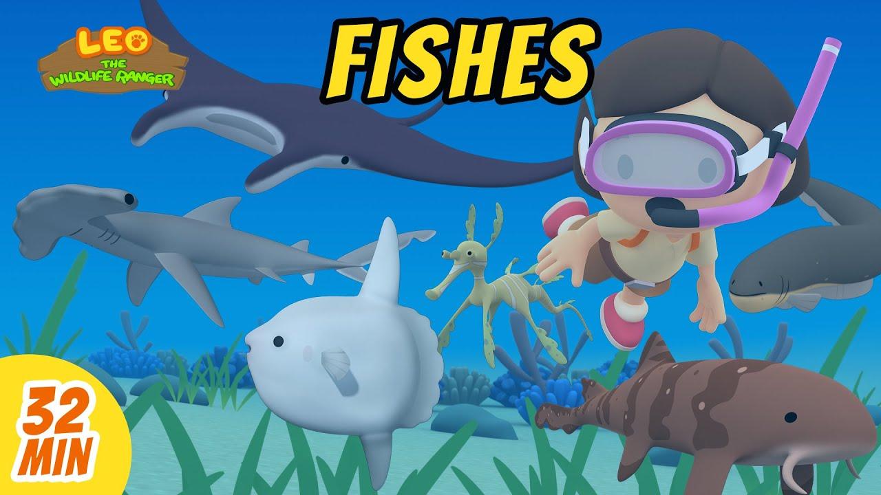 Fishes Minisode Compilation - Leo the Wildlife Ranger   Animation   For Kids