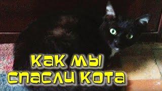 Любимый Кот / Как мы вязли взрослого кота с улицы и вылечили его